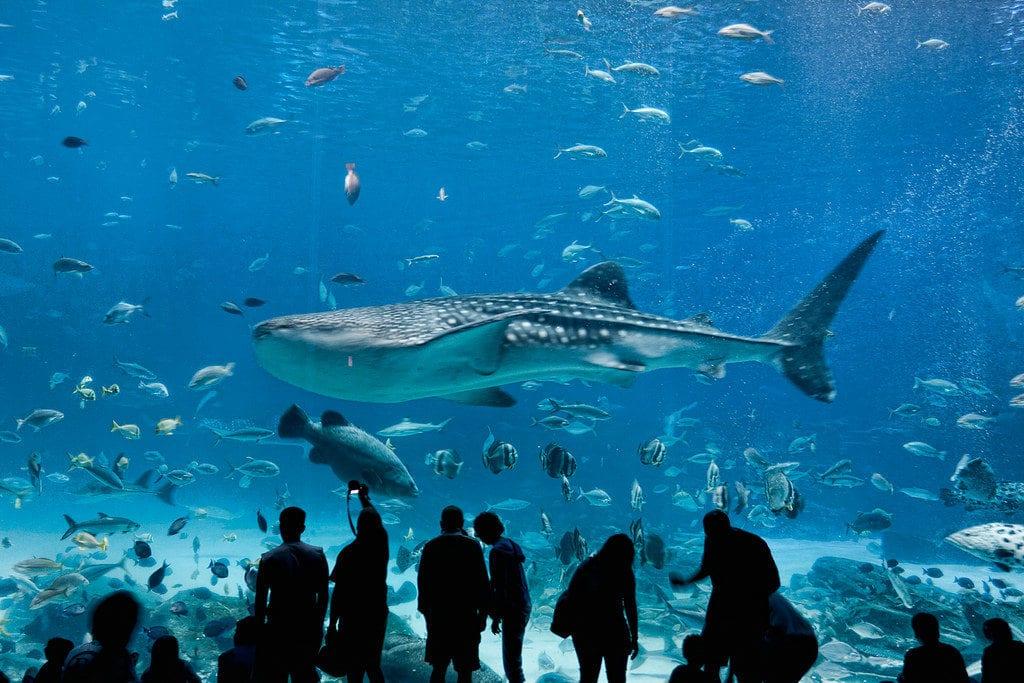 dallas-world-aquarium-4